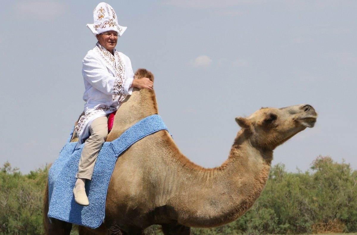 Астраханская область — лидер по количеству верблюдов