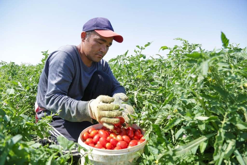 Астраханской области разрешили принять 300 мигрантов