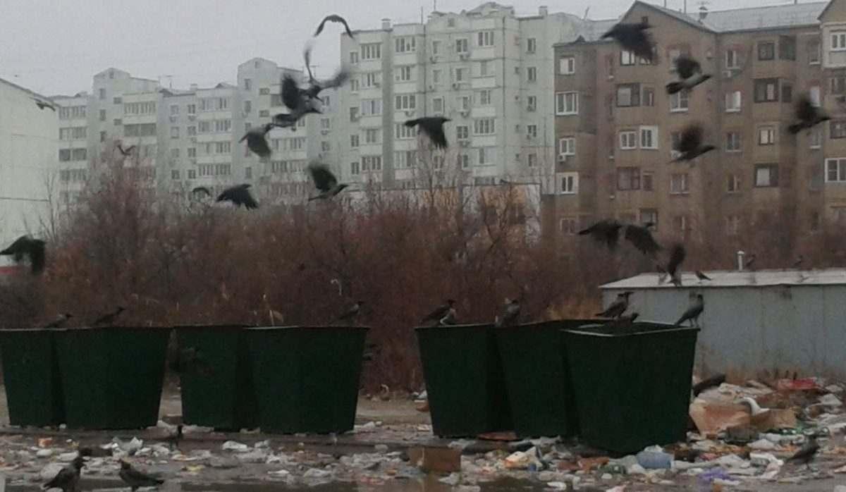 Проблемы с вывозом мусора в Астрахани в ближайшее время не исчезнут