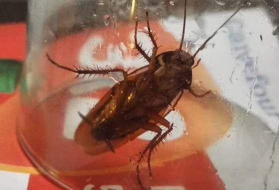 В дома астраханцев начали возвращаться тараканы