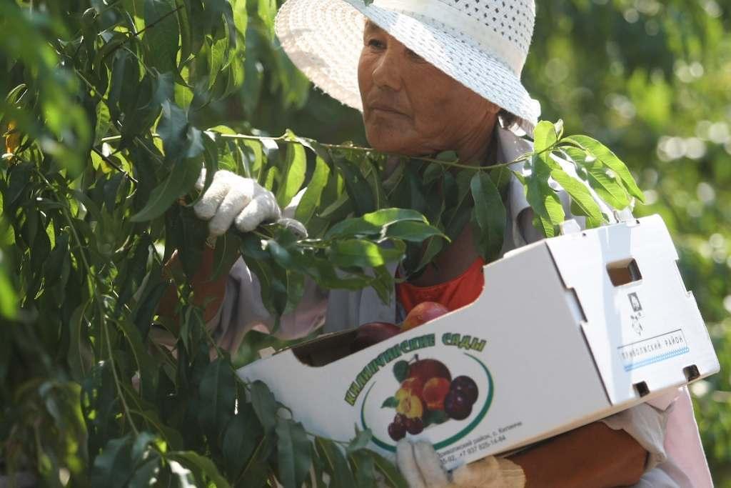 Расширению садов в Астраханской области помогут рублем