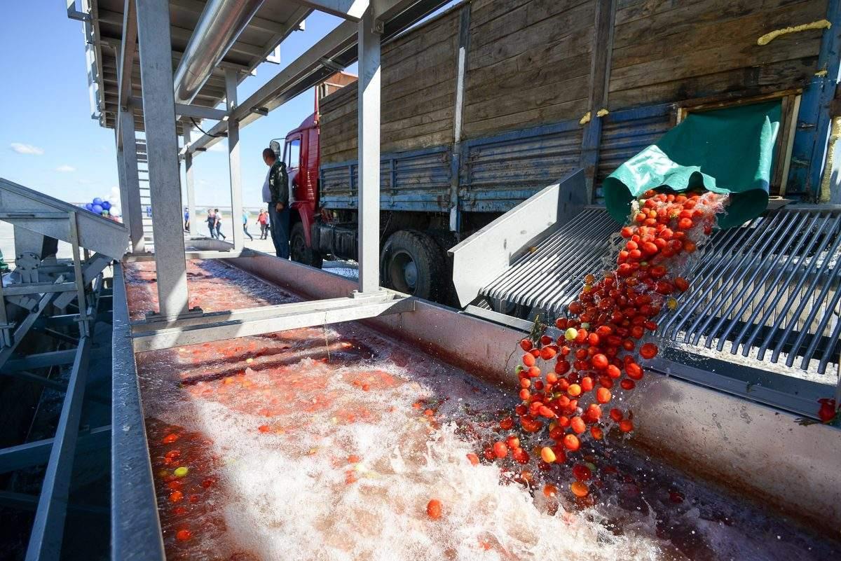 Астраханские «томатные проекты» нуждаются в инвестициях