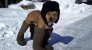 Астраханских кошек и собак будут защищать на митинге