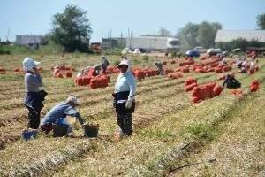 Озвучены зарплаты занятых в сельском хозяйстве астраханцев
