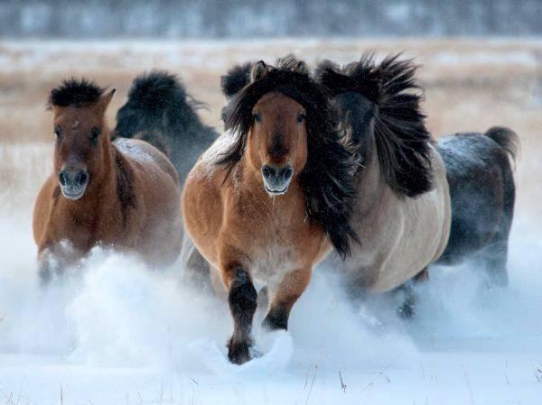 Трое мужчин «угнали» в Астраханской области табун лошадей