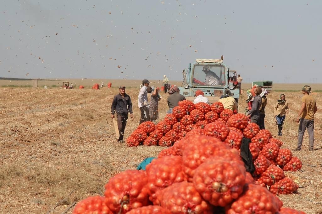 Губернатор увидел пятикратный рост экспорта астраханских овощей