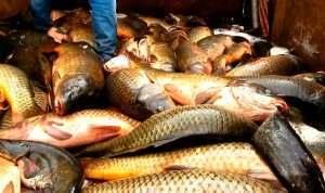 Пограничники взялись за астраханских рыбаков-промысловиков