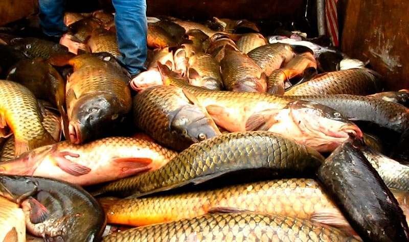 За попытку вернуть себе рыбу мужчина оштрафован на 900 тысяч