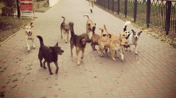 Бродячие собаки нанесли астраханцу ущерб на 37 тысяч рублей