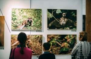 В кремле открылась фотовыставка астраханской природы