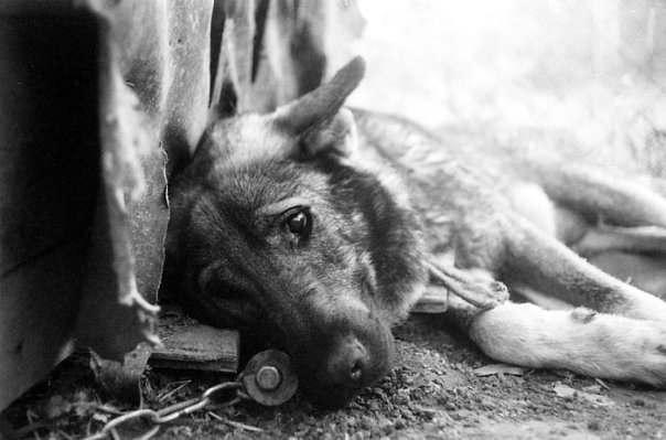 Строительство астраханского приюта для бездомных собак вновь отложили