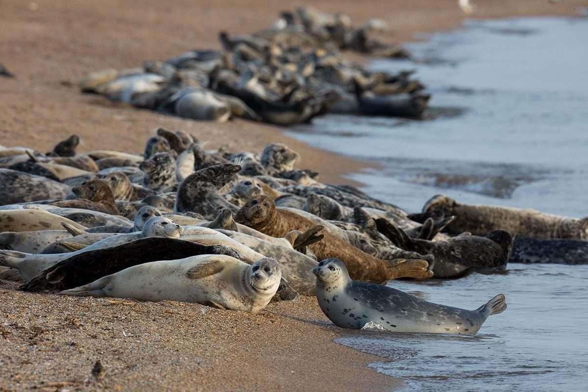 Астраханские пограничники поймали браконьеров с тюленьими шкурами