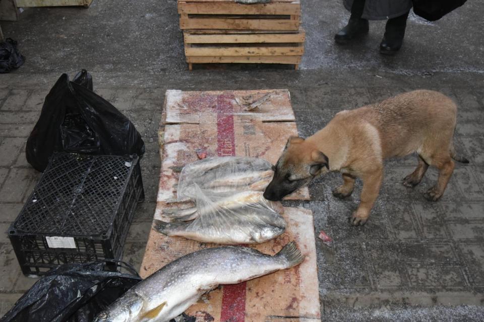 На крупнейших рынках Астрахани продают незаконно добытую рыбу