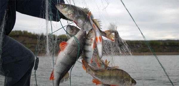 Девять раз опоясать Астраханский кремль: с начала года изъято 13 км рыбацких сетей