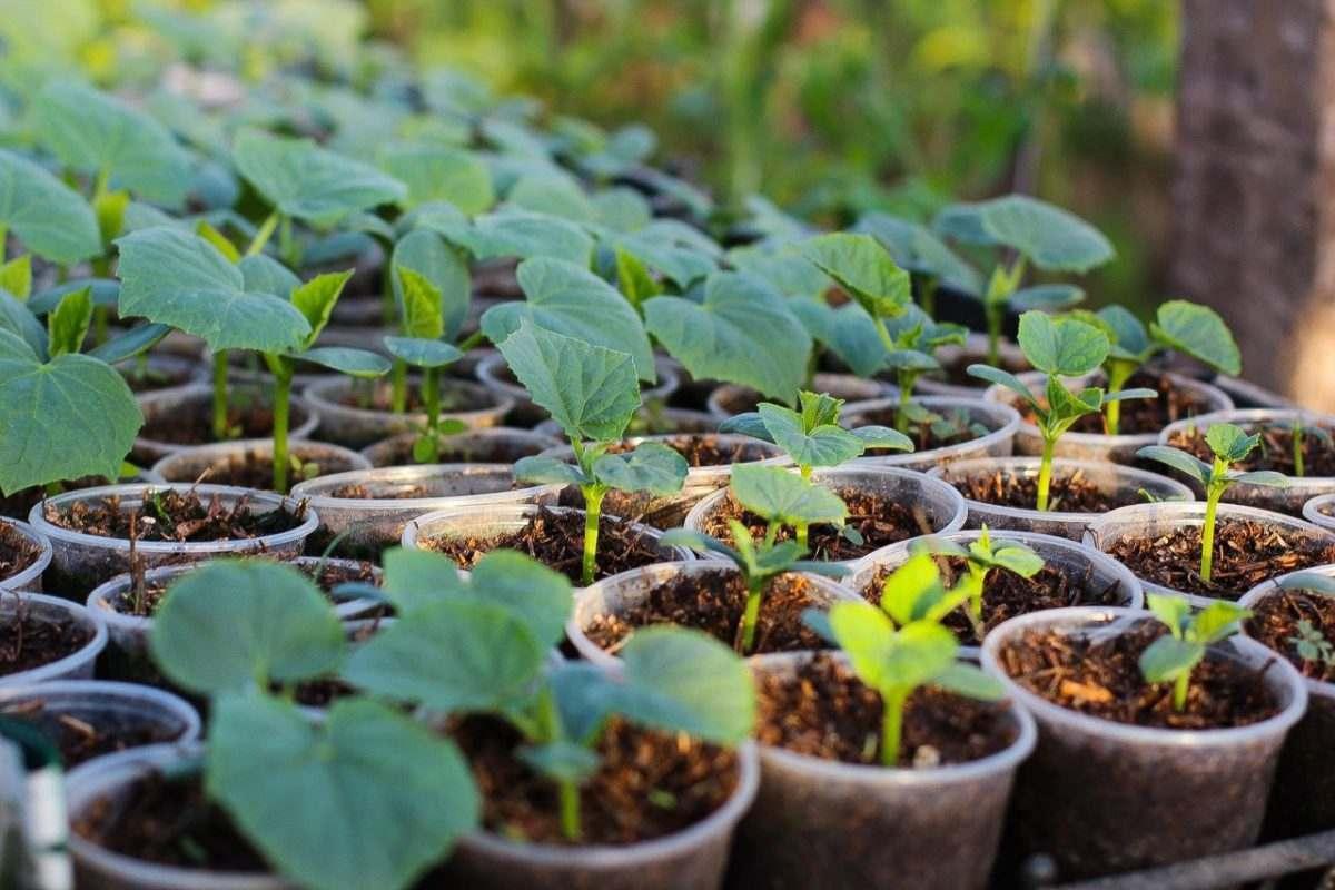 Астраханские фермеры получат 100 млн рублей господдержки