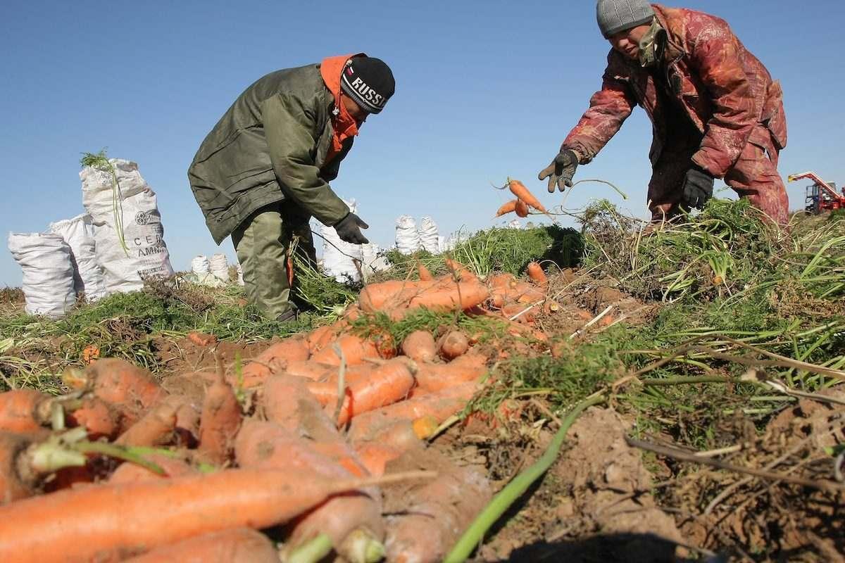 Производительность труда в Астраханской области: 130 тонн овощей на человека