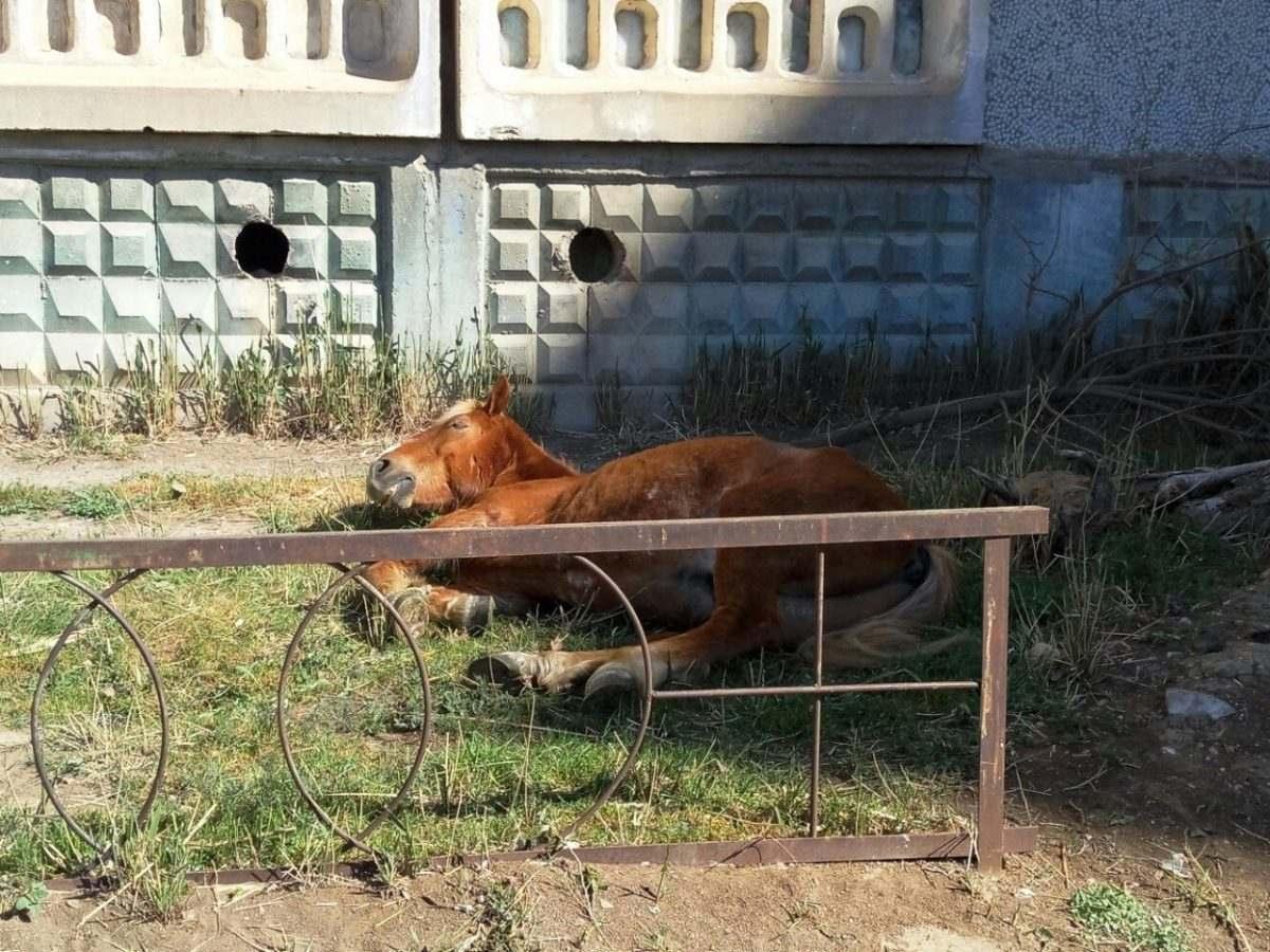 Астраханцы вместо конюшни поселили лошадь под окнами многоэтажки