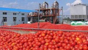 Астраханский завод томатной пасты удвоил переработку