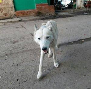 В Астрахани ищут потравивших собак догхантеров
