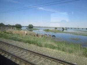 Домашние животные 30 раз экстренно тормозили поезда в Астраханской области