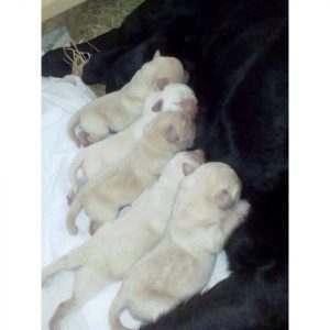 Астрахань в надежных лапах: в кинологической службе родились щенки