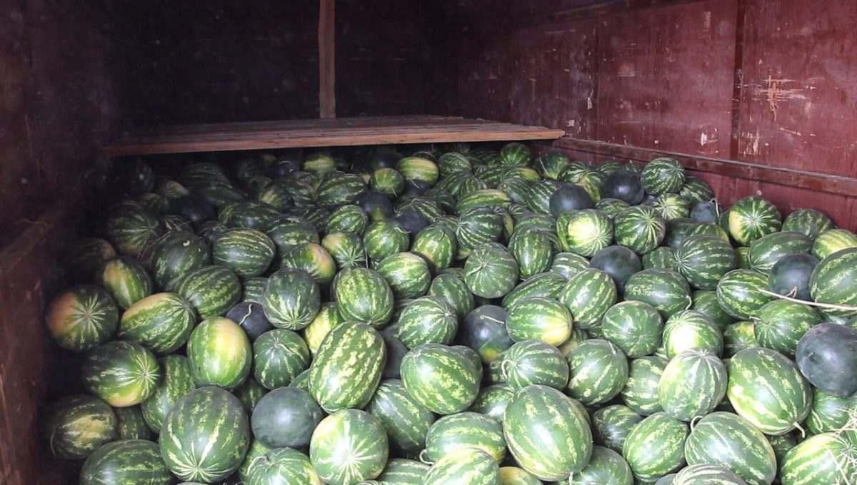 Из Астраханской области отправилась первая партия арбузов