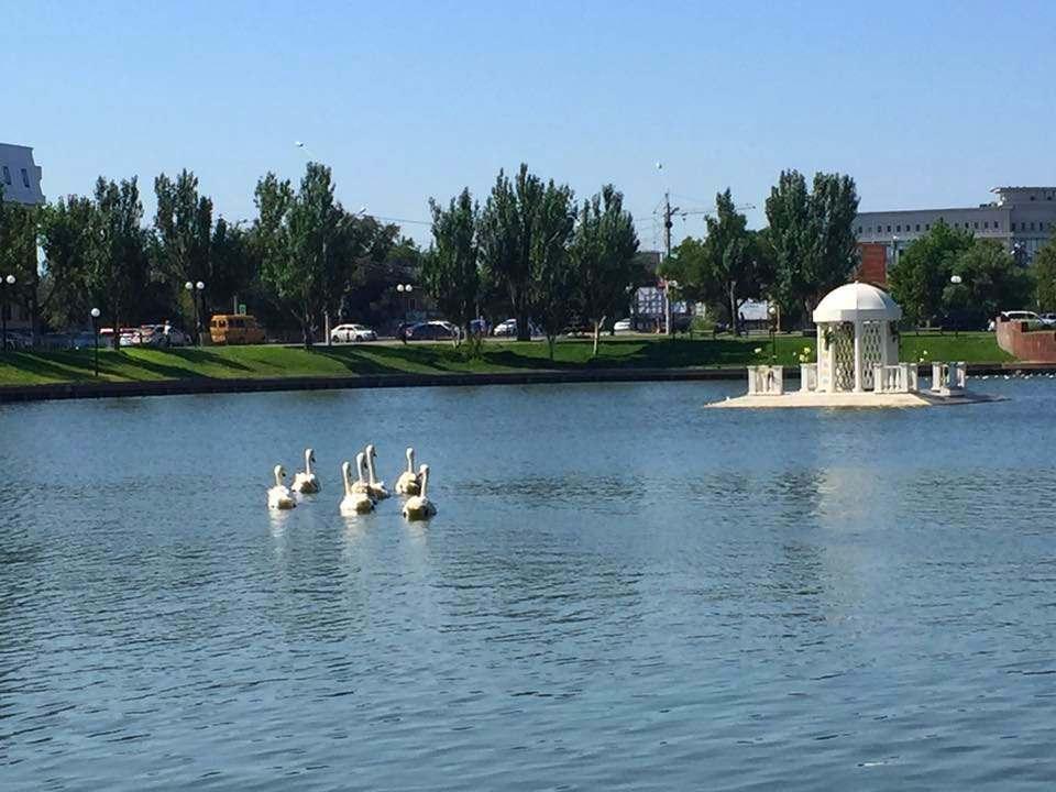 Семь лебедей вернулись на Лебединое озеро