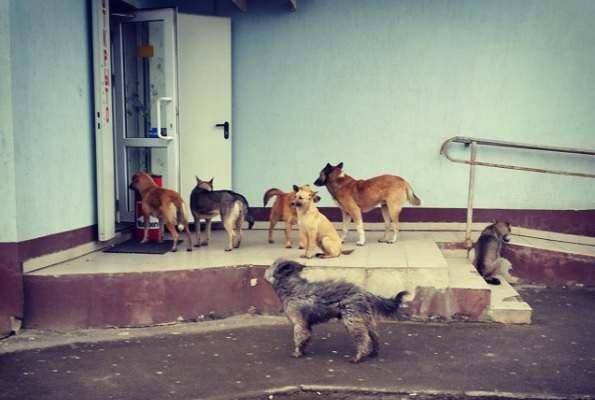 Бродячих собак в Астрахани вновь предлагают отстреливать