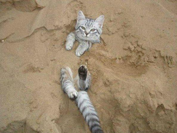 В Астрахани в этом году будут открыты три официальных пляжа