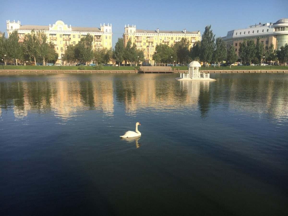 Лебедя с Лебединого озера вскроют для определения причин смерти