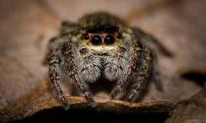 Астраханцы жалуются на нашествие пауков