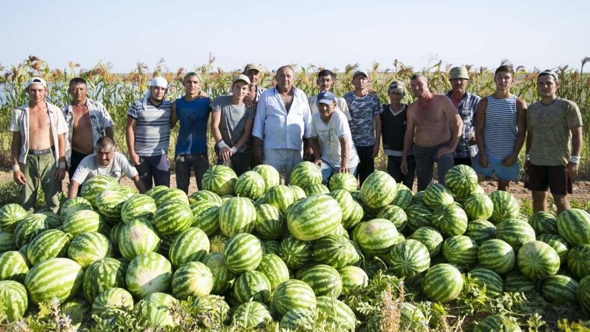 Астраханцы смогут купить на субботней ярмарке лучшие арбузы