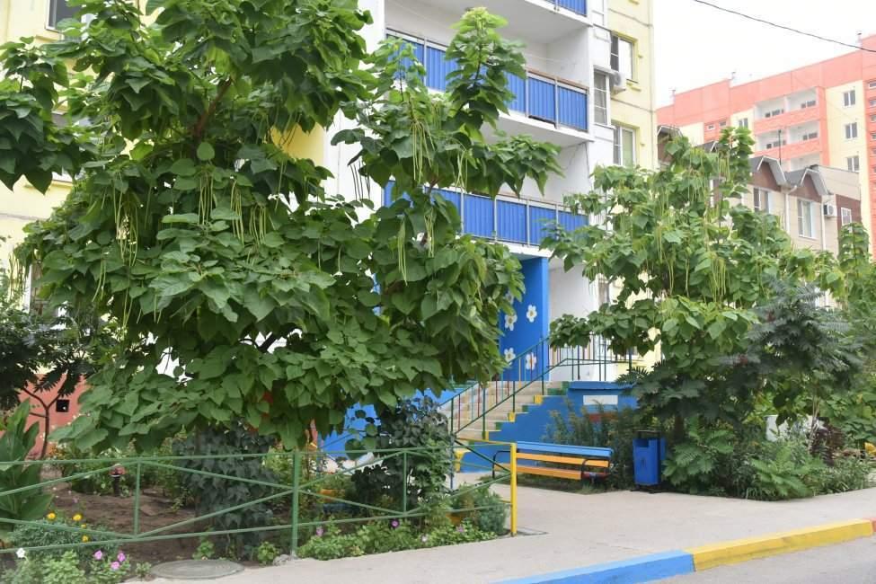 Астраханцы получат призы за самые красивые дворы
