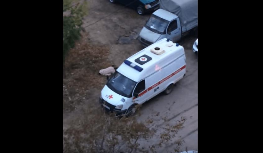 Видео: в Астрахани женщина лежит возле скорой помощи