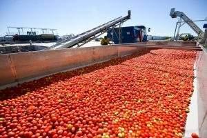 В Астраханской области попробуют построить второй завод томат-пасты