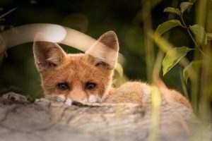 Волк, заяц: в Астраханской области стартует сезон охоты