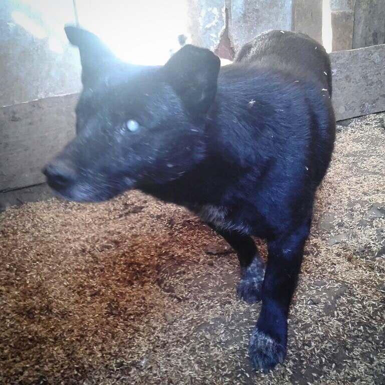 Видео дня: астраханцы спасают слепого пса из колодца