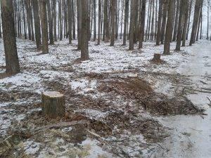 В Астрахани стремительно «лысеет» Тополиная роща