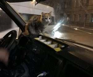 В Астрахани кошка забежала греться в маршрутку и нашла дом