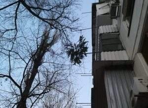 Фото дня: астраханцы выбрасывают надоевшие елки с балкона
