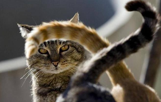 Александр Жилкин призвал «подтянуть хвосты»