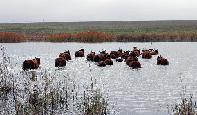 Весной Астраханскую область может ждать наводнение