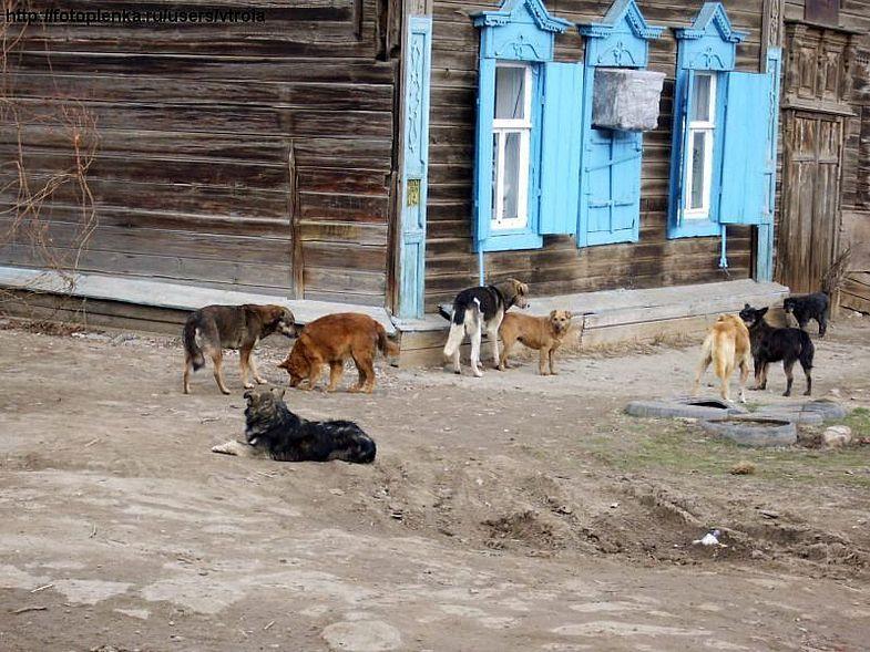 Более трех тысяч бродячих животных отловили в Астрахани