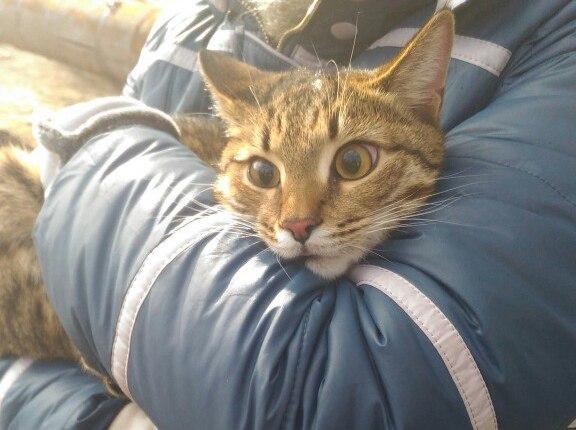 В Астрахани котейку спасали около десятка человек