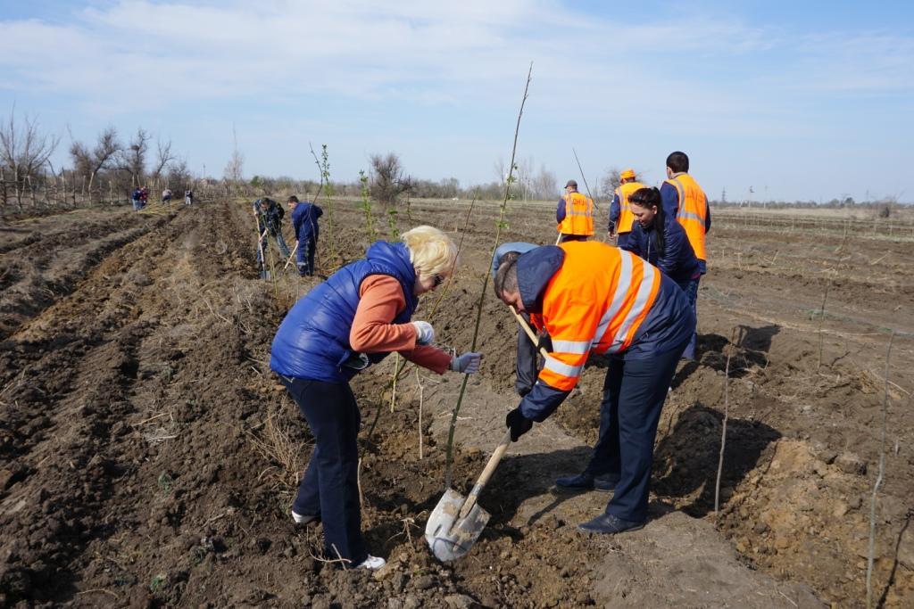Астраханские железнодорожники высадили в апреле около 4 тыс. деревьев