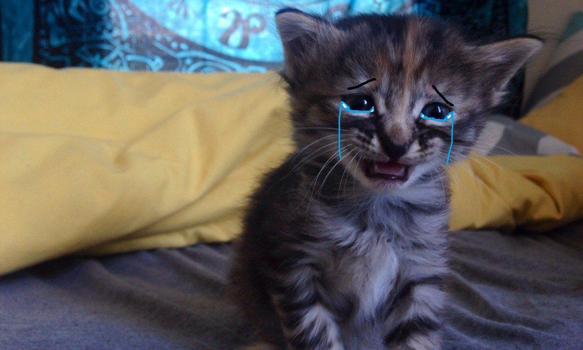 Пьяная мать придавила котенка на глазах у рыдающего сына
