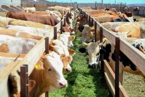 Состояние астраханского сельского хозяйства: мнение