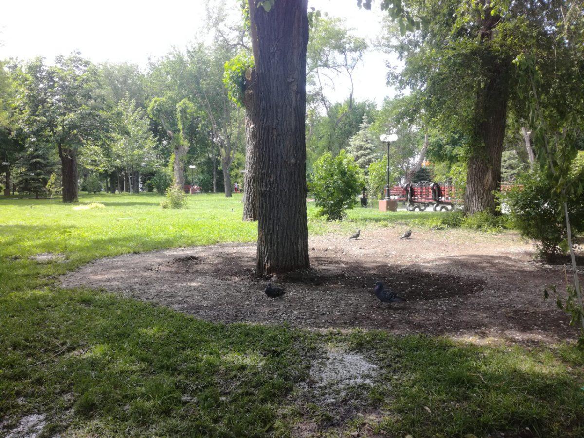 Из Братского сада в Астрахани исчезли пальцы