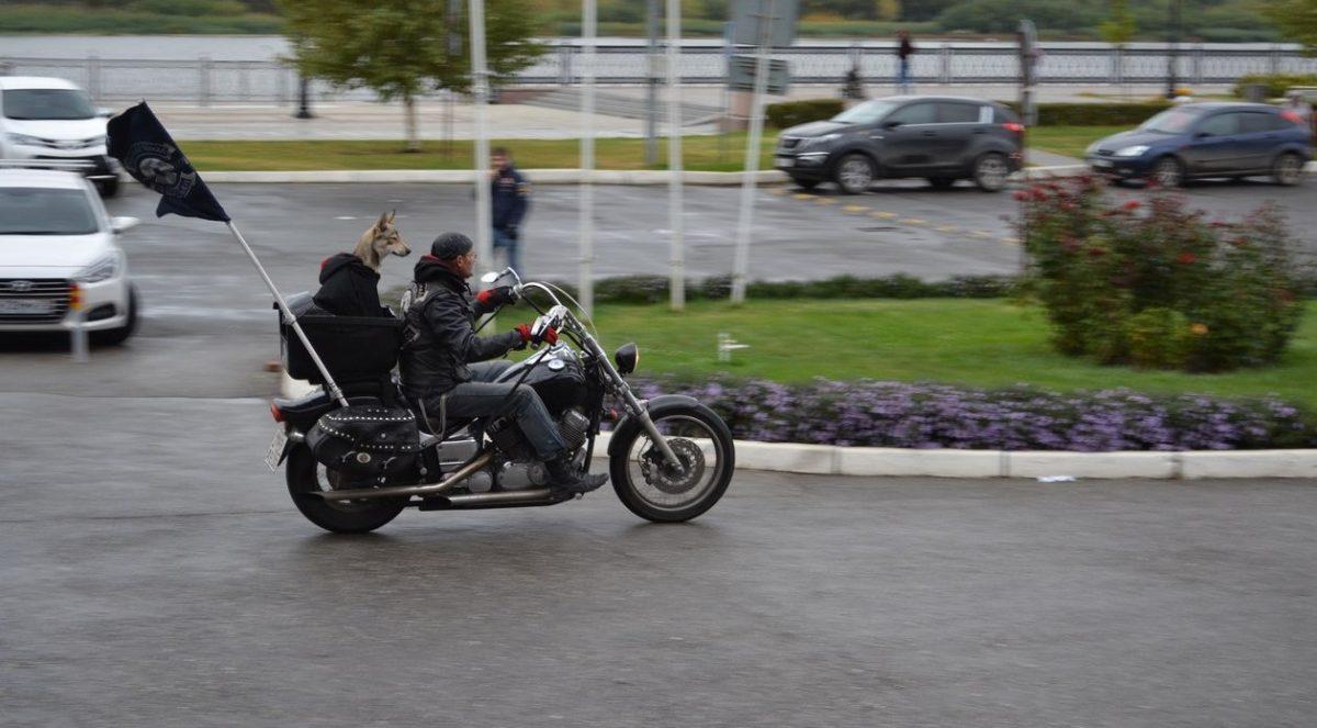 В Астрахани пес в куртке разъезжает на байке