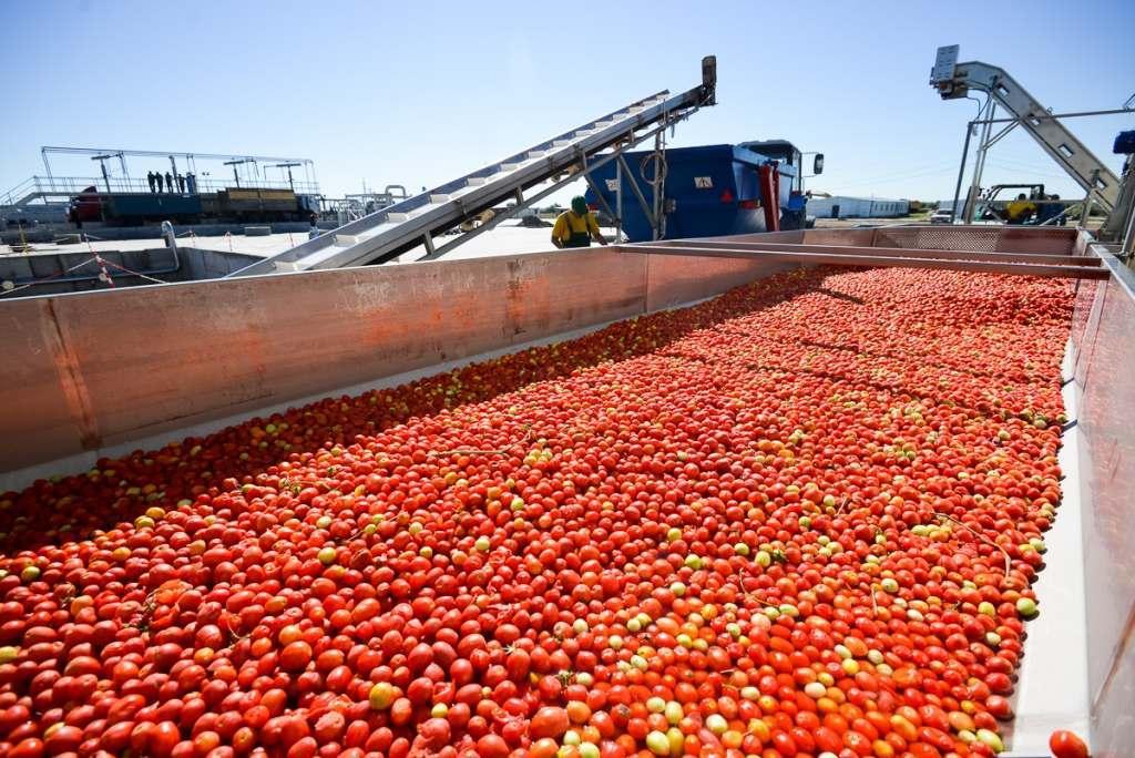 Строительство завода томат-пасты в Енотаевском районе пока под вопросом